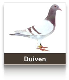 sel_duiven.png