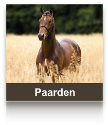 sel_paarden.png