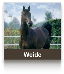 sel_weide.png